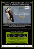 Afrikatik itzulitako arrano arrantzaleak behatzeko doako irteerak antolatu ditu ekainean hasita Urdaibai Bird Centerrek