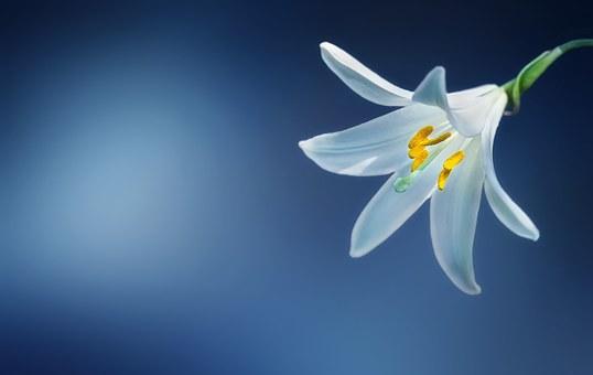 Aranzadi Zientzia Elkarteko Botanika Sailean praktikak egiteko deialdia