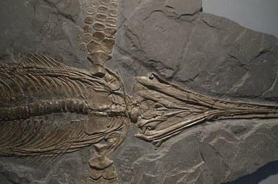 Aztarnategi paleontologikoen lehen katalogo digitala osatzen ari dira