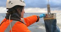 Bizkaiko golkoko antxoa-biomasa kalkulatuko dute