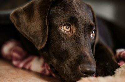 Gazteen suizidioa prebenitzeko animaliek lagundutako psikoterapian oinarritutako programa garatuko dute