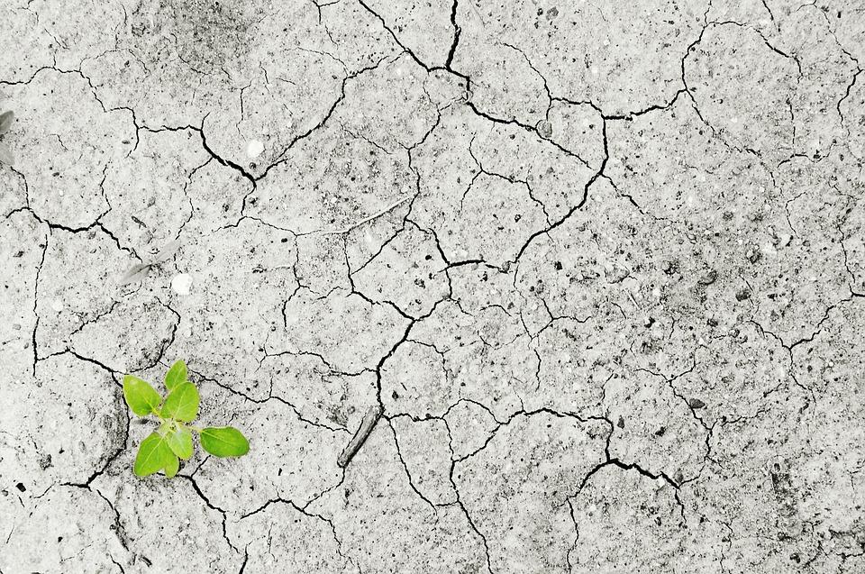 """""""Klima-aldaketa: Euskal Herritik Pirinioetako leihoak zabalduz"""" jardunaldiko aurkezpenak Otarrean eskuragarri"""