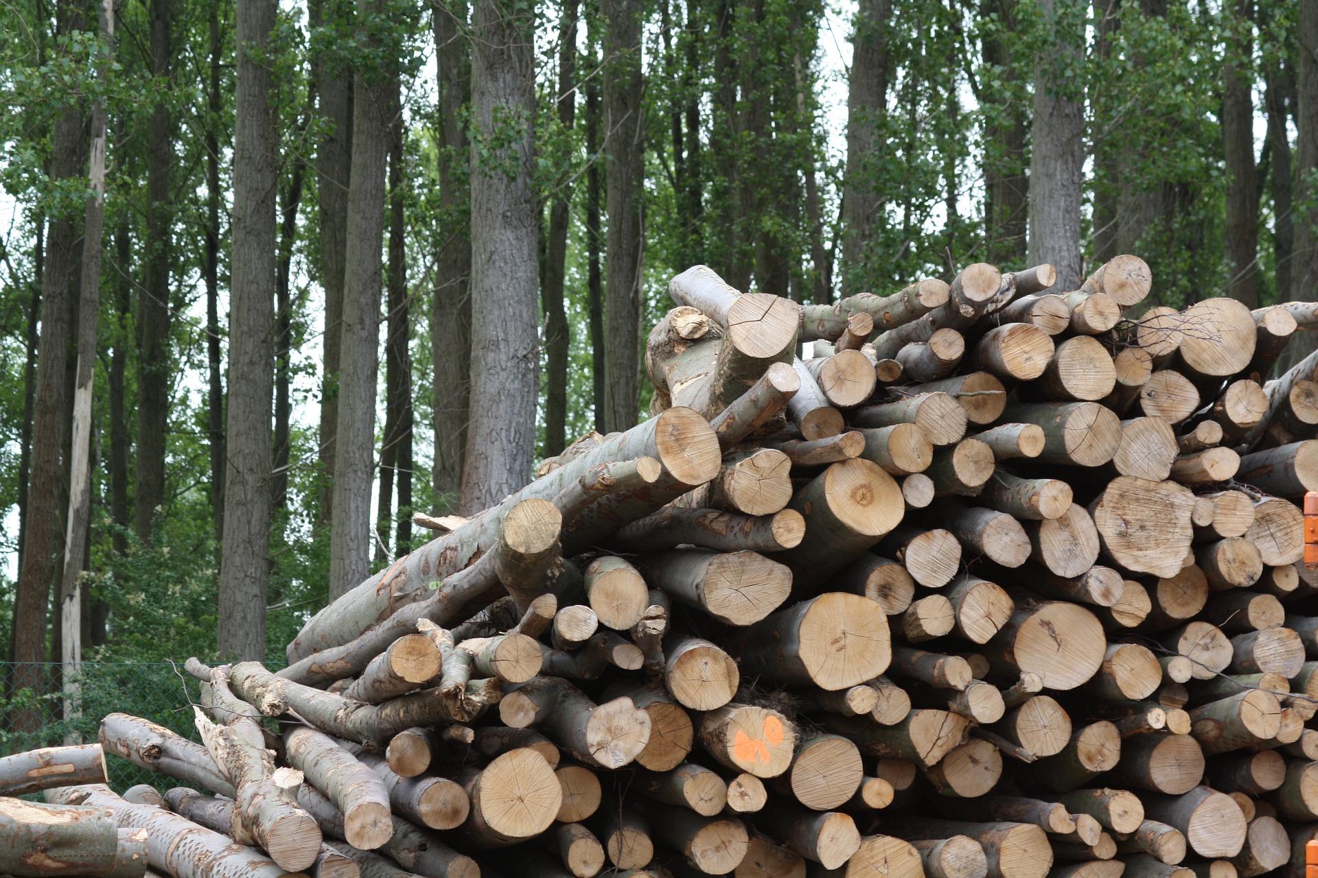 Nafarroako biomasa energia jasangarri bezala erabiltzeko proposamena