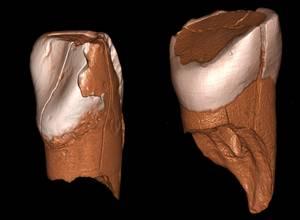 Protoaurignac kultura gizaki modernoari dagokiola ondorioztatu da