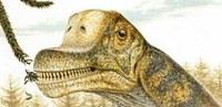 Sauropodo espezie berri baten burezurrak aurkitu dituzte