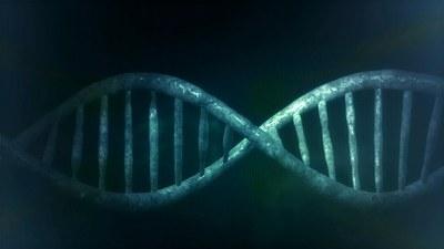 Zuzenbidea eta Giza Genoma hizpide